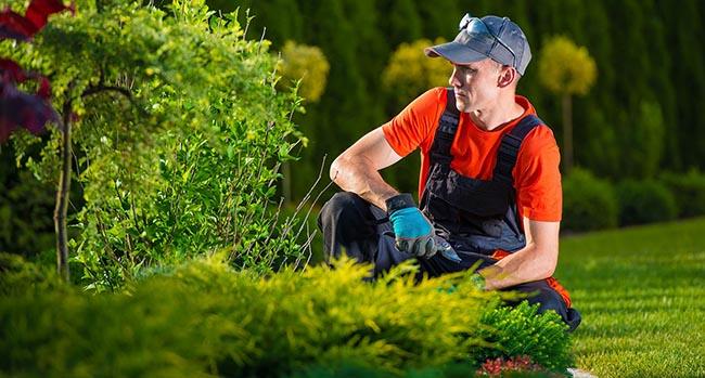 Corso di Addetto Giardiniere inizio Febbraio 2020